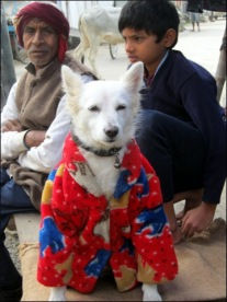 Dog wearing fleece jacket (Varanasi, Jan. 2010)