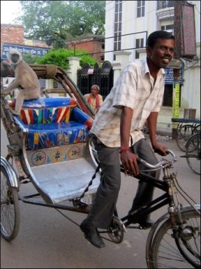 Monkey on cycle-rickshaw (Varanasi, Apr. 2014)