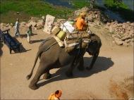 Sometimes, even an elephant!